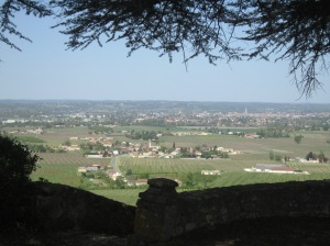 The view of the Dordogne Valley from beneath cedar tree at Chateau Ladesvignes