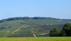 The hills and vineyards of Champagne