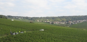 Harvesting in Champagne vineyards near Eperney