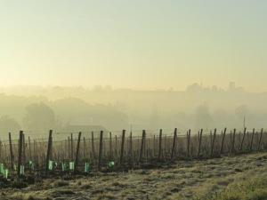 Fog creating an ethereal landscape