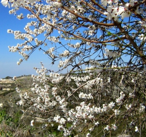 The arrival of Spring - Paphos area