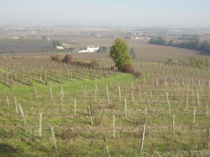 Autumn view from Terroir Feely