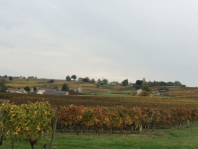 The Vineyard landscape