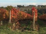 Vineyards, Saussignac