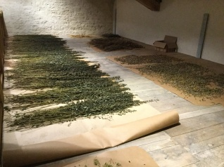 The herb drying room at Ch Monestier La Tour - nettles in the left foreground