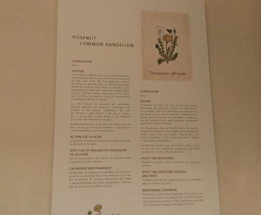 Dandelion/Pissenlit description